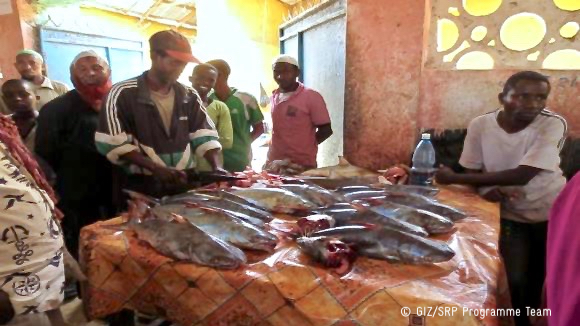 Introducing the Fish for Nutrition Programme in Somalia